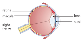 EyeWebtrade